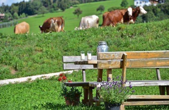 maso-latte-mucca